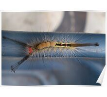 White-marked Tussock Moth Caterpillar Poster