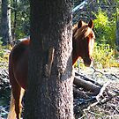 Horse by lilestduncan