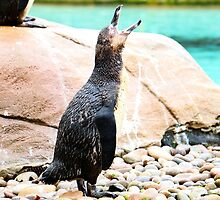 Penguin calling ! by Bumchkin