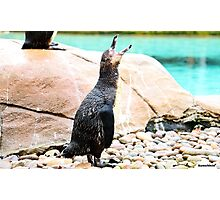 Penguin calling ! Photographic Print