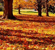 Mother Natures Fall Carpeting by Larry Llewellyn