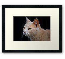 Barn Cat 2 Framed Print