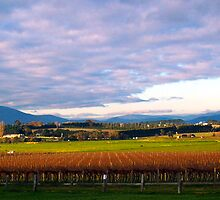 Yarra Valley Winery by Christine  Wilson Photography