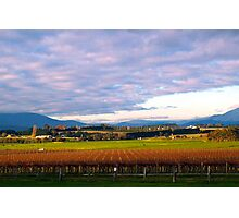 Yarra Valley Winery Photographic Print