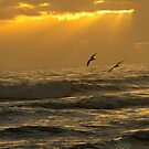 Pelicans flying over ocean waves during sunrise by ValeriesGallery