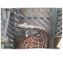 Giraffe yoga Poster