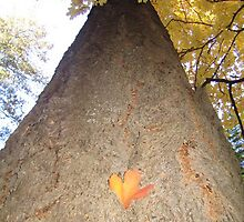 Fallen Leaf by Beelicious
