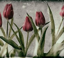 Tulips by Nigel R Bell