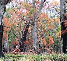 Bushfire Regeneration by Heidiglass