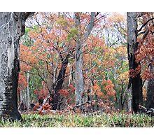 Bushfire Regeneration Photographic Print
