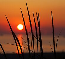 Sunset and Dune Grasses by Craig Sterken