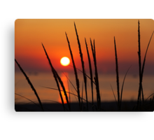 Sunset and Dune Grasses Canvas Print