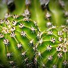 Captivating Cactus by Ashli Zis