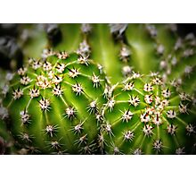 Captivating Cactus Photographic Print
