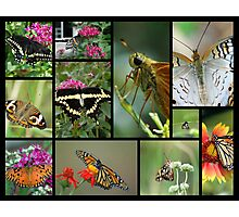 My Butterfly Collection Photographic Print