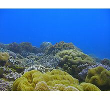 Junkyard reef Photographic Print