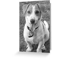 The look of innocence? Greeting Card