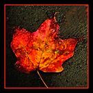 Fall Leaf Variation by Mary Campbell