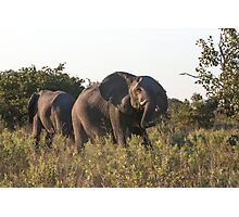 Charging Elephant Photographic Print