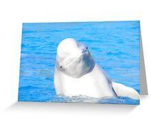 Beluga Smile. Greeting Card