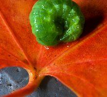 Autumn Caterpillar by failingjune