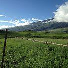 Maui County - Road to Hana by prjncess