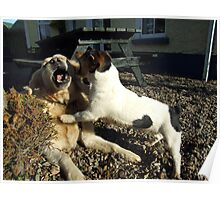 Two playful dogs Poster