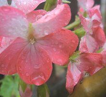 Pink rain by Melissa Park