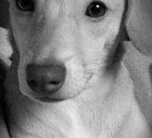 Precious Posing Puppy Sticker
