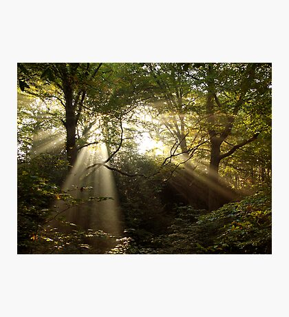 Bridle Road Wood Photographic Print