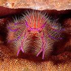 Hairy Squat Lobster by MattTworkowski