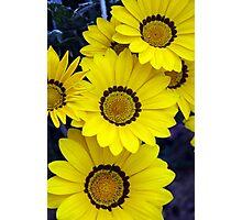 Yellow Bunch Photographic Print