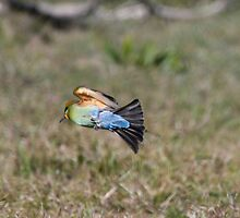 Bee Eater manoeuvre by Normf