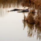 Sunken Boat by Michael  Dreese