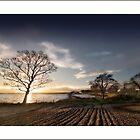 Strangford Field by jimfrombangor
