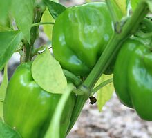 Green Peppers by SmilinEyes