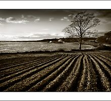 Strangford Field in monochrome by jimfrombangor