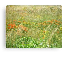 FCMA Meadow - Cape Cod - Barnstable County - Massachusetts Canvas Print