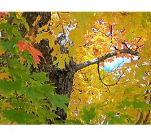 Changing Colors Photographic Print