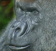 Portrait of a Gorilla by CanDuCreations