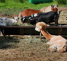 Farm Animal Friends by SmilinEyes