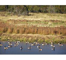 Autumn Geese Photographic Print