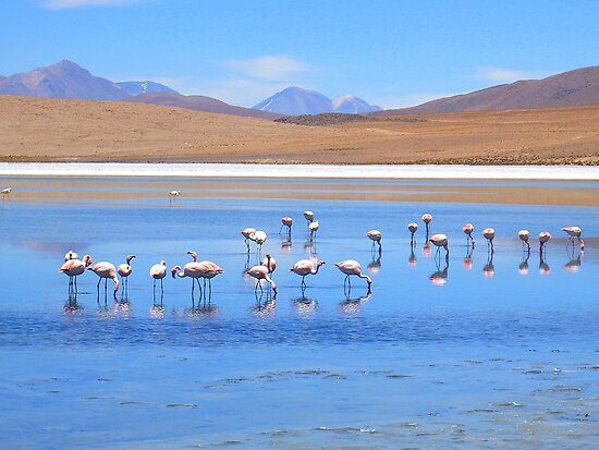 A Scatter of Flamingos :) by Honor Kyne