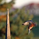 Landing by BigD