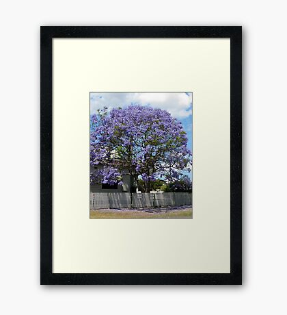 Jacaranda Tree in Bloom Framed Print