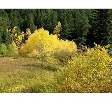 Feild Of Gold - Upper Spearfish Canyon Photographic Print
