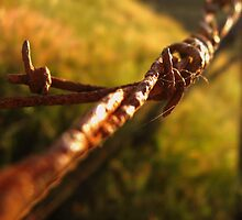 Rusty Barbed Wire by zakchaos