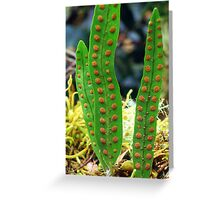 Fern frond spores. Greeting Card