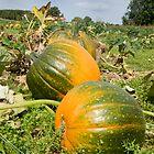Pumpkin Patch by BigRPhoto