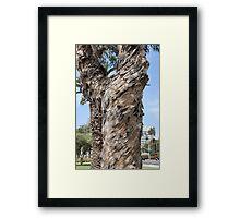 Santa Monica Eucalyptus Framed Print